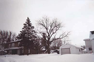 Trees_in_front_of_home