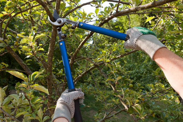 tree pruning Huston's Tree Service